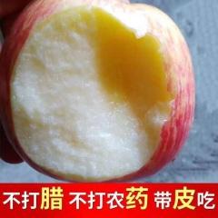 【峻农果品】烟台栖霞红富士苹果75mm优质果28个净重10斤包邮包售后