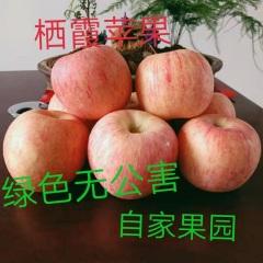 【峻农果品】烟台栖霞红富士苹果80---85mm优惠果12个6斤装包售后包邮
