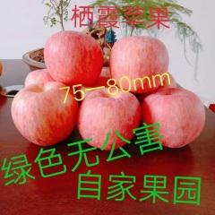 【峻农果品】烟台栖霞红富士苹果75-80mm优质果净重10斤包邮包售后
