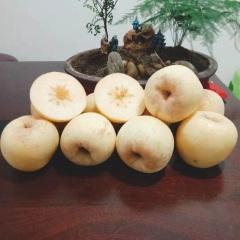 【峻农果品】烟台栖霞奶油富士苹果2.5kg丑果特价