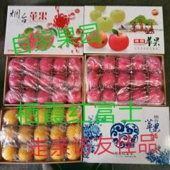 【峻农果品】烟台栖霞红富士苹果15个礼盒装净重8.5斤包售后包邮