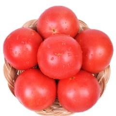 普罗旺斯 西红柿 新鲜采摘 5斤装