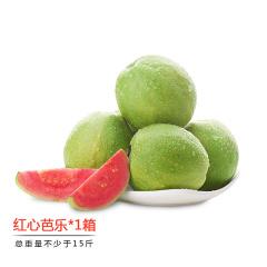 福建漳州红心芭乐尝鲜组