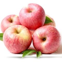 【新鲜水果】延安山地有机红富士苹果 16-18个 大果约9-10斤(单果80-90mm)