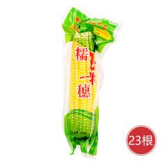 山西忻州非转基因甜糯玉米(黄) 货号127925