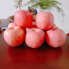 {峻农果品}烟台栖霞红富士苹果90mm优质果净重2.5kg包邮